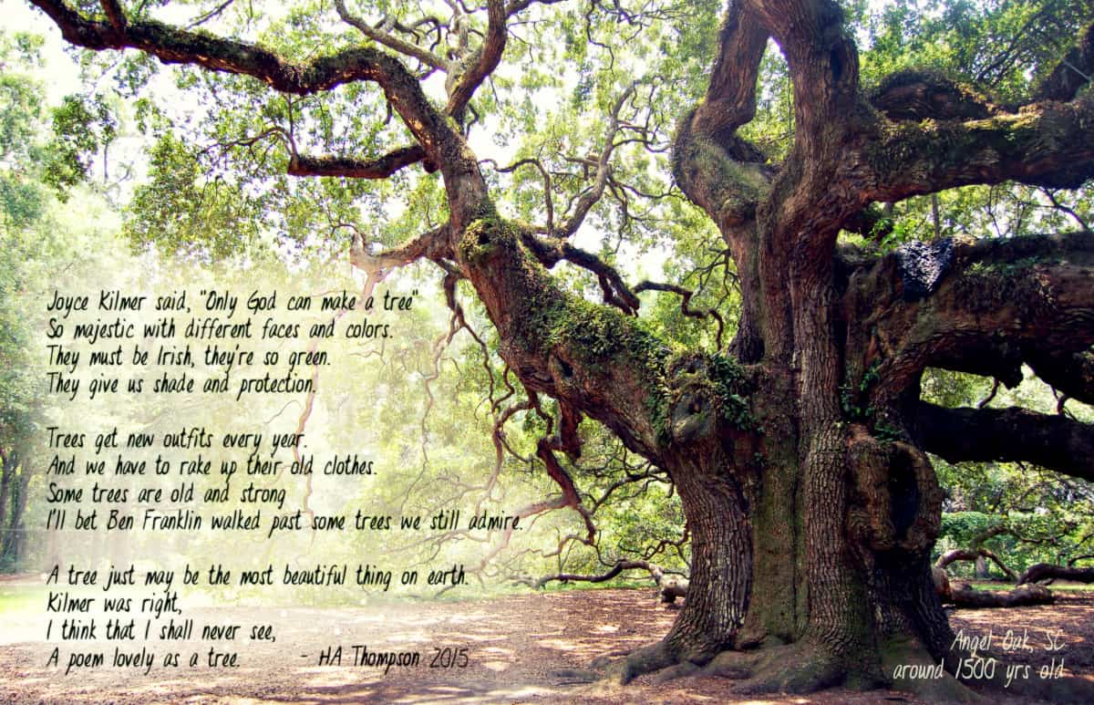 HA_Angel_Oak_